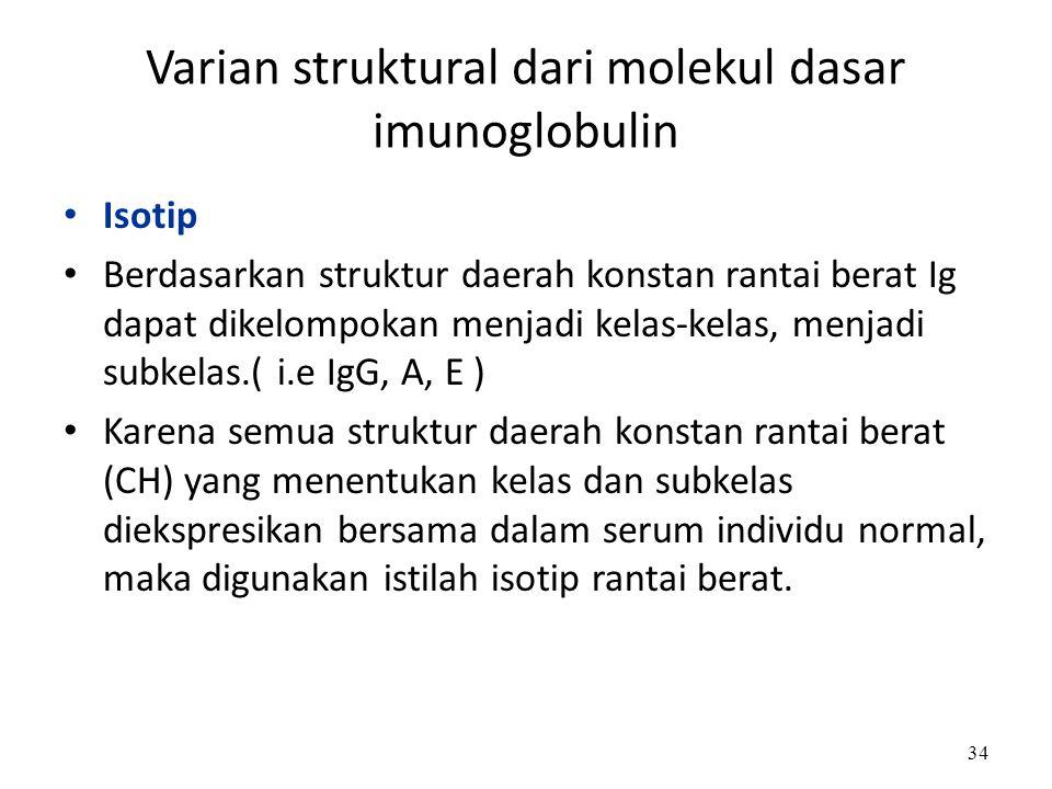 Varian struktural dari molekul dasar imunoglobulin