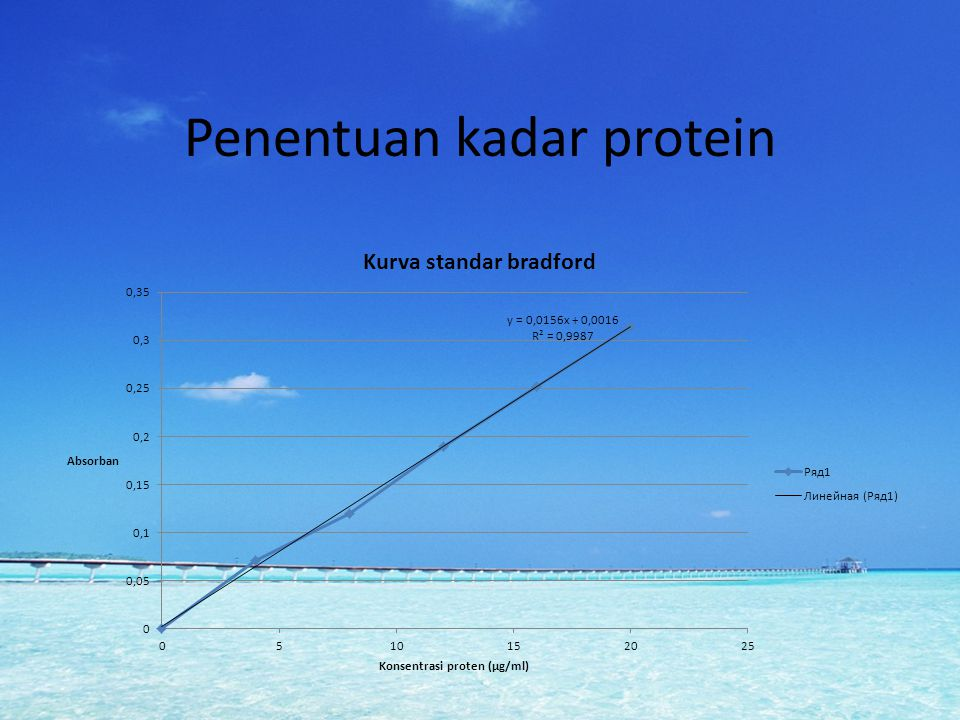 Penentuan kadar protein