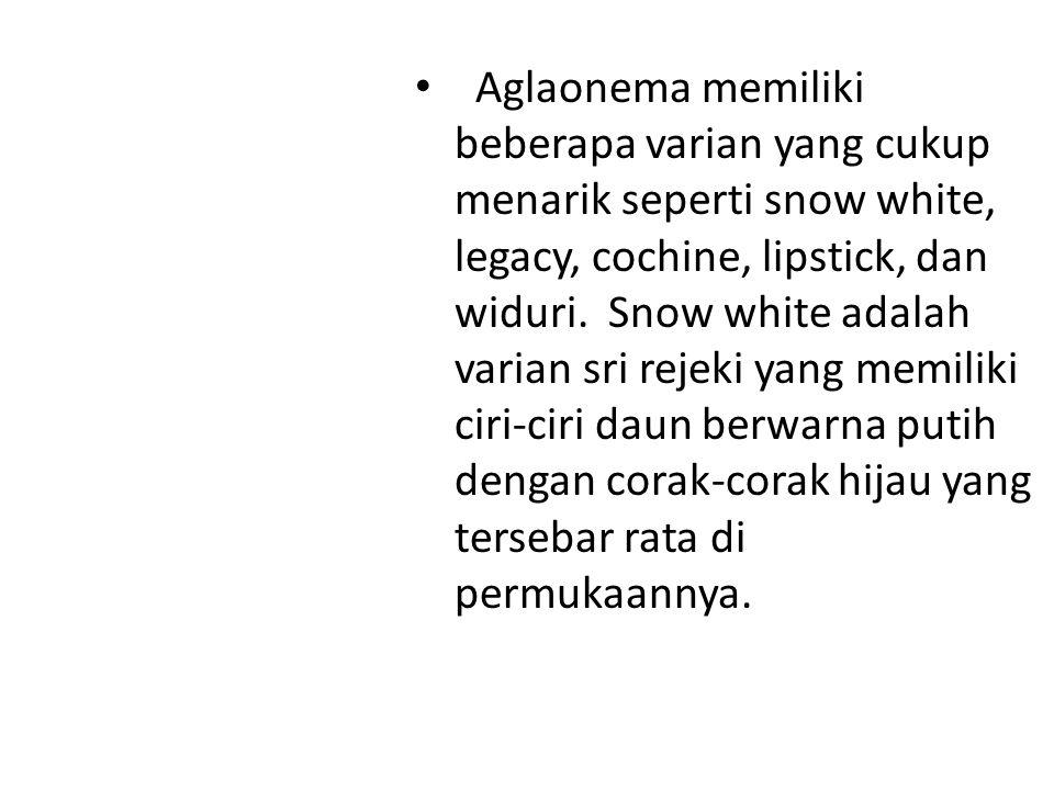 Aglaonema memiliki beberapa varian yang cukup menarik seperti snow white, legacy, cochine, lipstick, dan widuri. Snow white adalah varian sri rejeki yang memiliki ciri-ciri daun berwarna putih dengan corak-corak hijau yang tersebar rata di permukaannya.