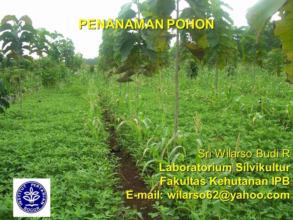 PENANAMAN POHON Sri Wilarso Budi R Laboratorium Silvikultur Fakultas Kehutanan IPB E-mail: wilarso62@yahoo.com.