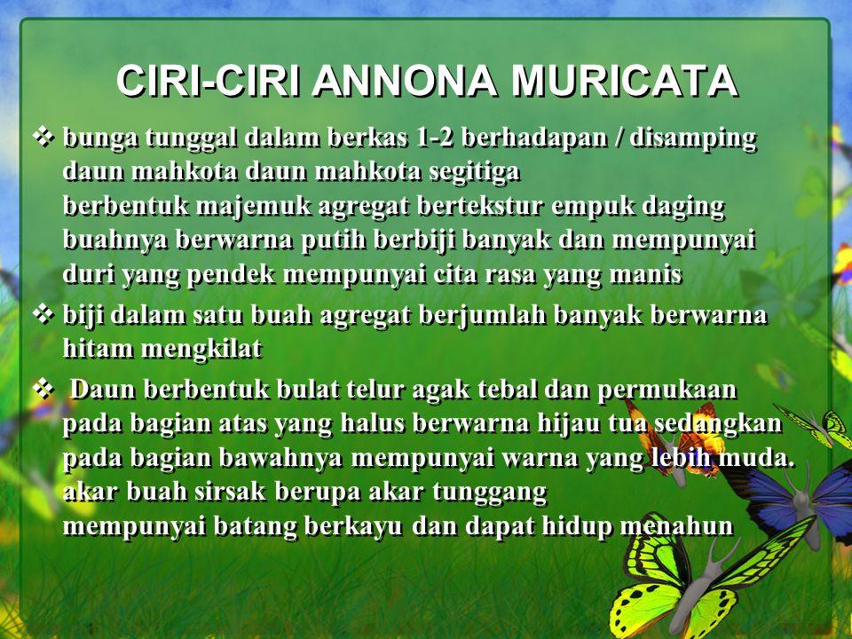 CIRI-CIRI ANNONA MURICATA