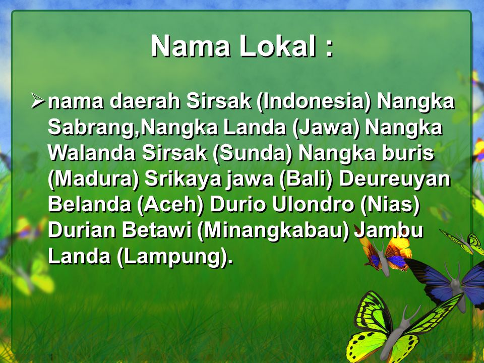 Nama Lokal :