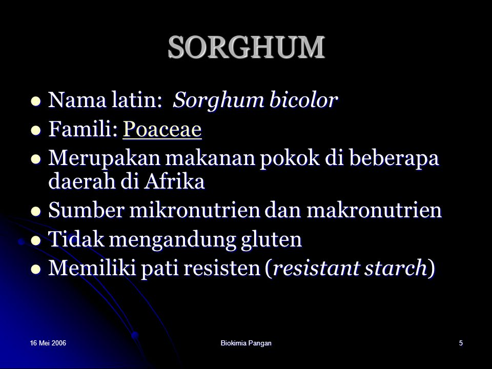 SORGHUM Nama latin: Sorghum bicolor Famili: Poaceae