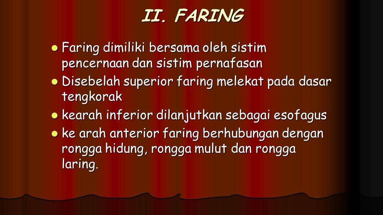 II. FARING Faring dimiliki bersama oleh sistim pencernaan dan sistim pernafasan. Disebelah superior faring melekat pada dasar tengkorak.