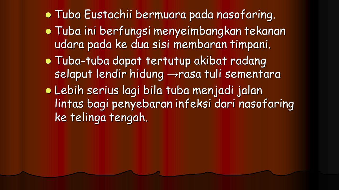 Tuba Eustachii bermuara pada nasofaring.
