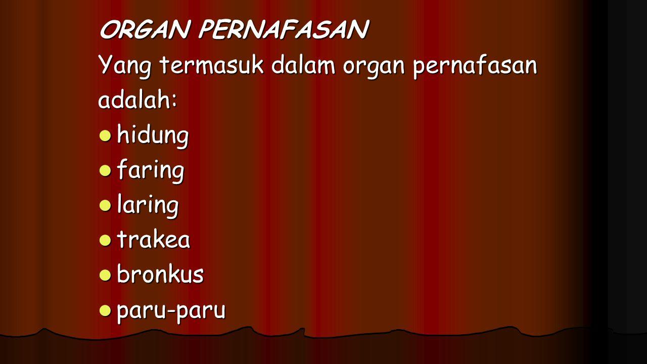ORGAN PERNAFASAN Yang termasuk dalam organ pernafasan. adalah: hidung. faring. laring. trakea.