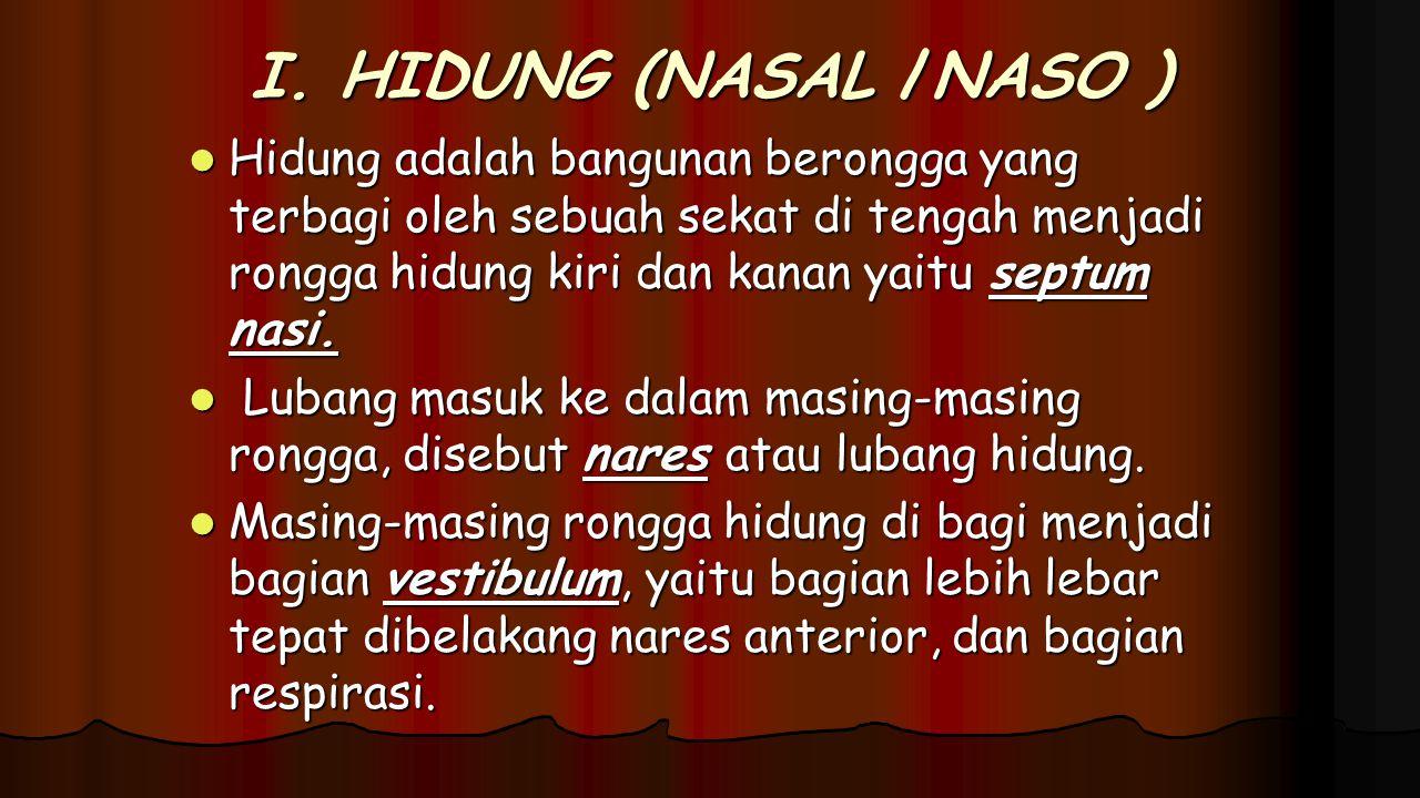 I. HIDUNG (NASAL /NASO )
