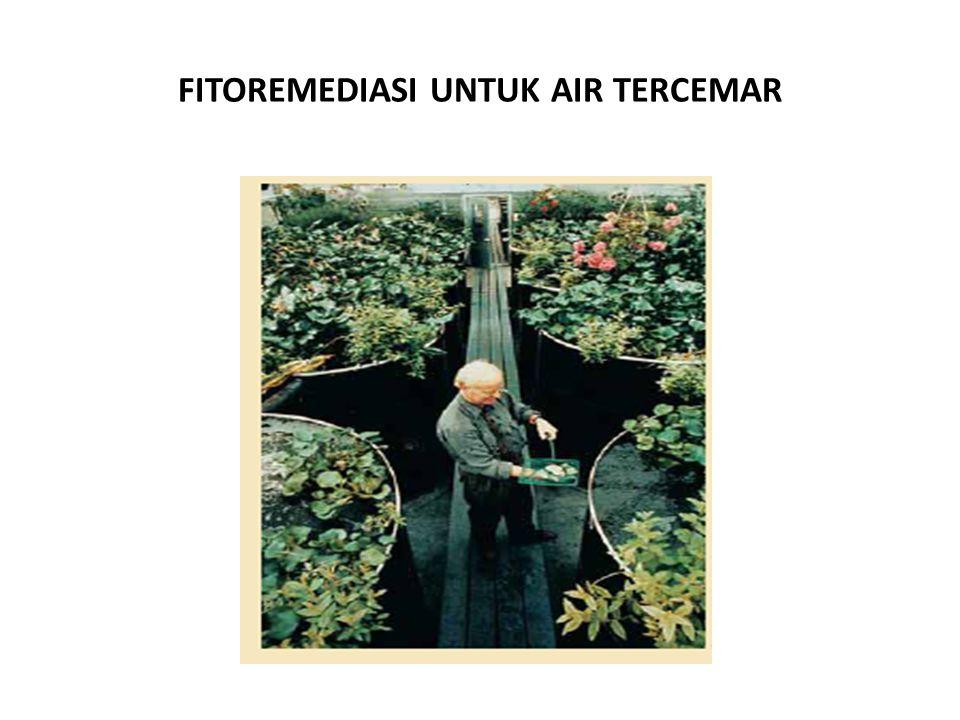 FITOREMEDIASI UNTUK AIR TERCEMAR
