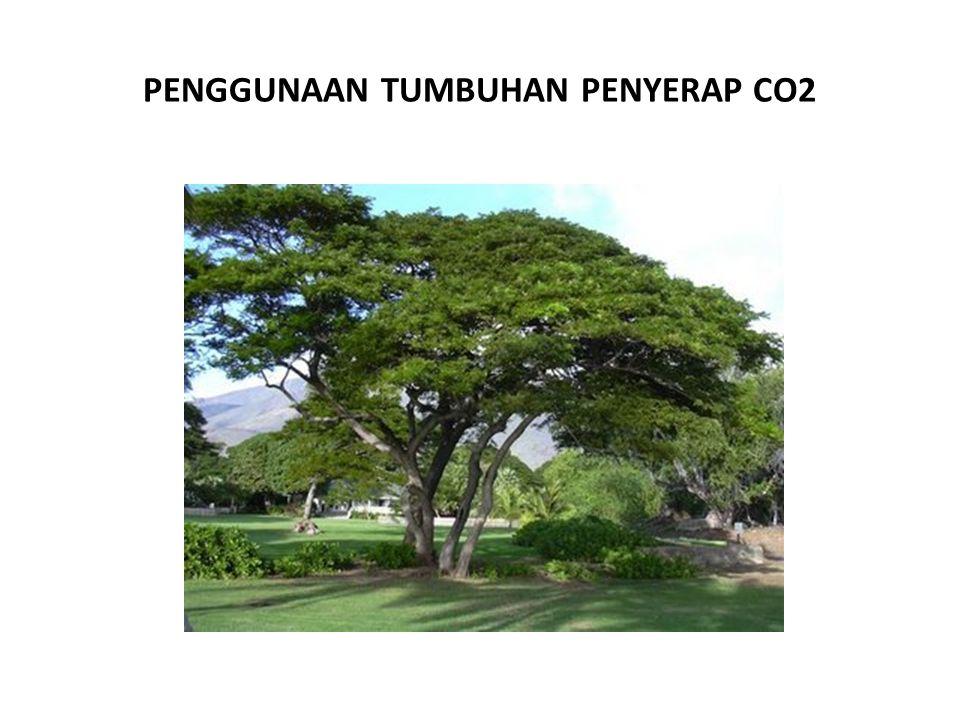 PENGGUNAAN TUMBUHAN PENYERAP CO2