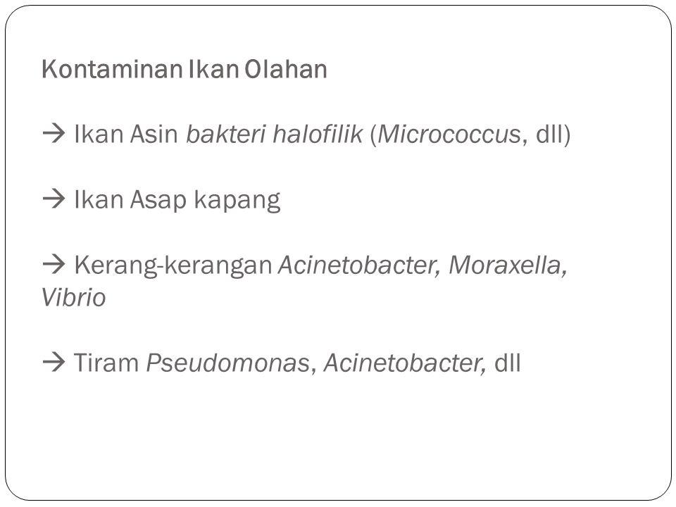 Kontaminan Ikan Olahan  Ikan Asin bakteri halofilik (Micrococcus, dll)  Ikan Asap kapang  Kerang-kerangan Acinetobacter, Moraxella, Vibrio  Tiram Pseudomonas, Acinetobacter, dll