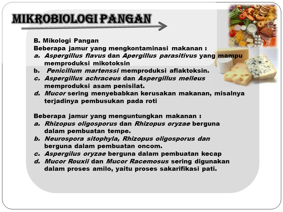 MIKROBIOLOGI PANGAN B. Mikologi Pangan