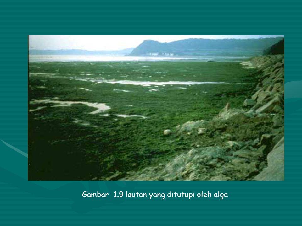 Gambar 1.9 lautan yang ditutupi oleh alga