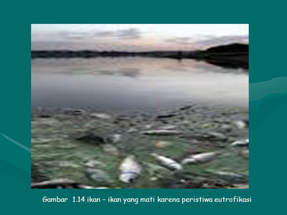 Gambar 1.14 ikan – ikan yang mati karena peristiwa eutrofikasi