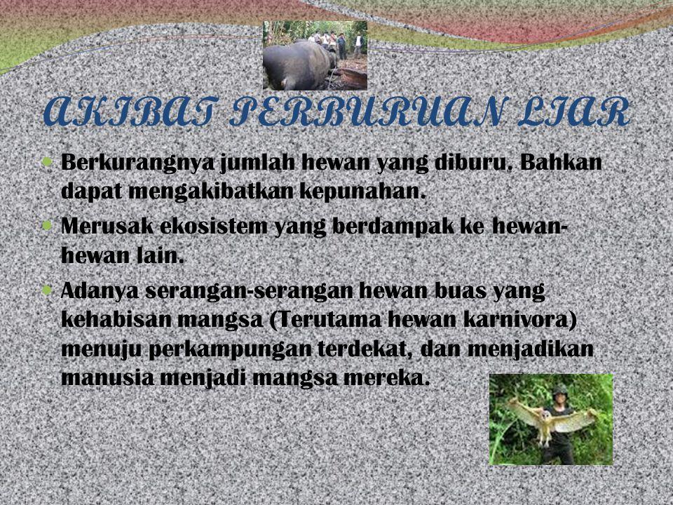 AKIBAT PERBURUAN LIAR Berkurangnya jumlah hewan yang diburu. Bahkan dapat mengakibatkan kepunahan.