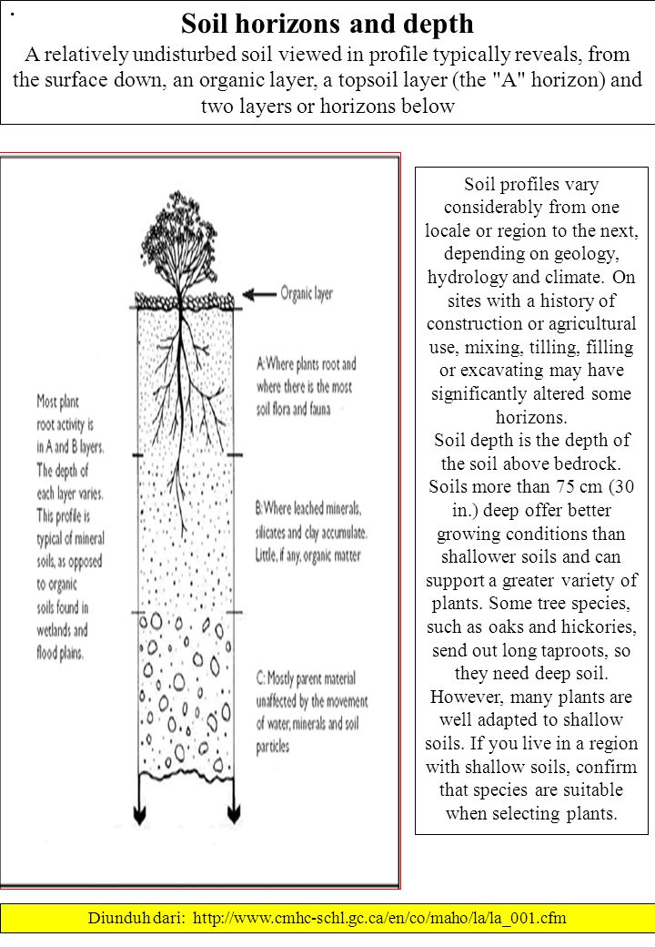 Soil horizons and depth