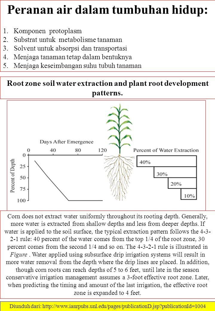 Peranan air dalam tumbuhan hidup: