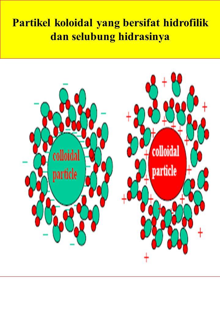 Partikel koloidal yang bersifat hidrofilik dan selubung hidrasinya