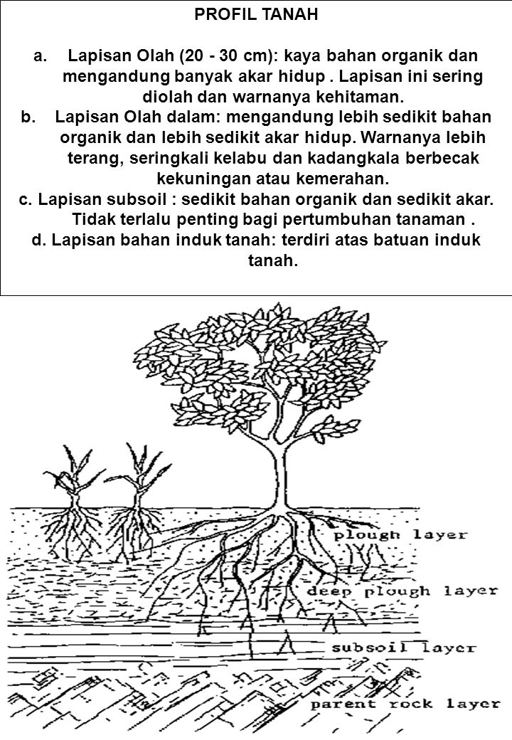 d. Lapisan bahan induk tanah: terdiri atas batuan induk tanah.