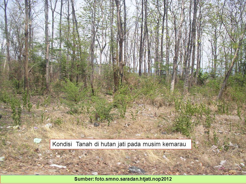 Sumber: foto.smno.saradan.htjati.nop2012
