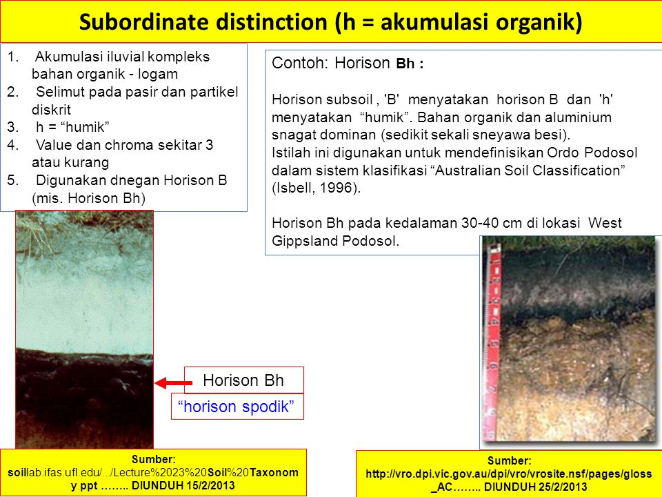 Subordinate distinction (h = akumulasi organik)