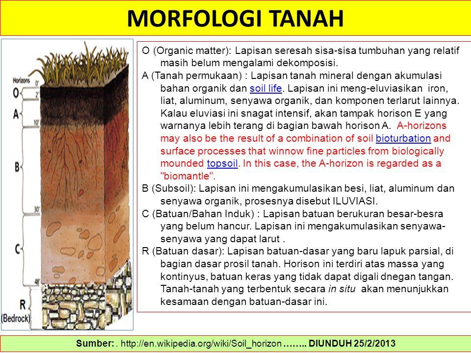 MORFOLOGI TANAH O (Organic matter): Lapisan seresah sisa-sisa tumbuhan yang relatif masih belum mengalami dekomposisi.