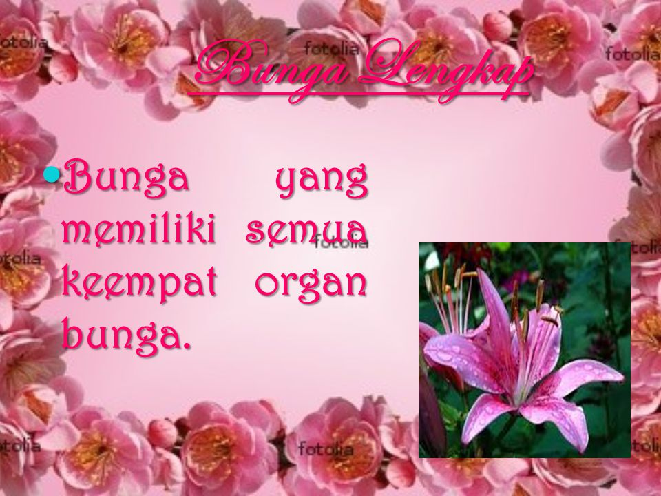 Bunga Lengkap Bunga yang memiliki semua keempat organ bunga.