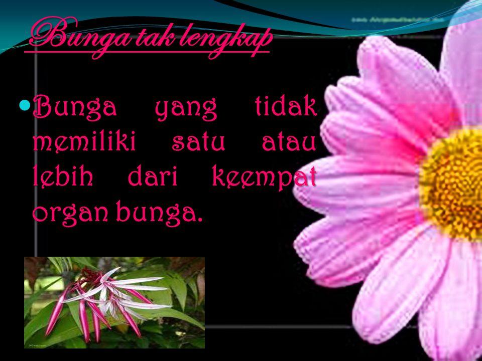 Bunga tak lengkap Bunga yang tidak memiliki satu atau lebih dari keempat organ bunga.