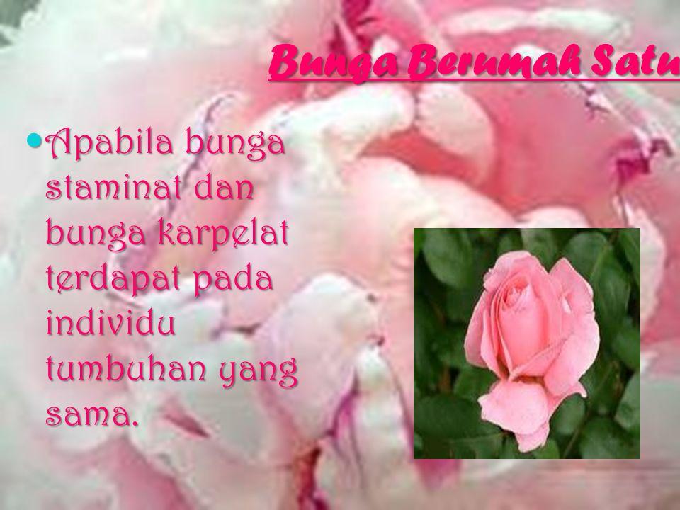 Bunga Berumah Satu Apabila bunga staminat dan bunga karpelat terdapat pada individu tumbuhan yang sama.