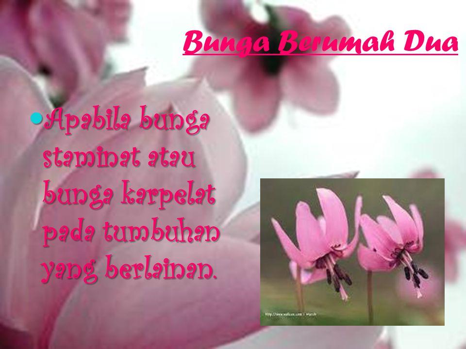 Bunga Berumah Dua Apabila bunga staminat atau bunga karpelat pada tumbuhan yang berlainan.
