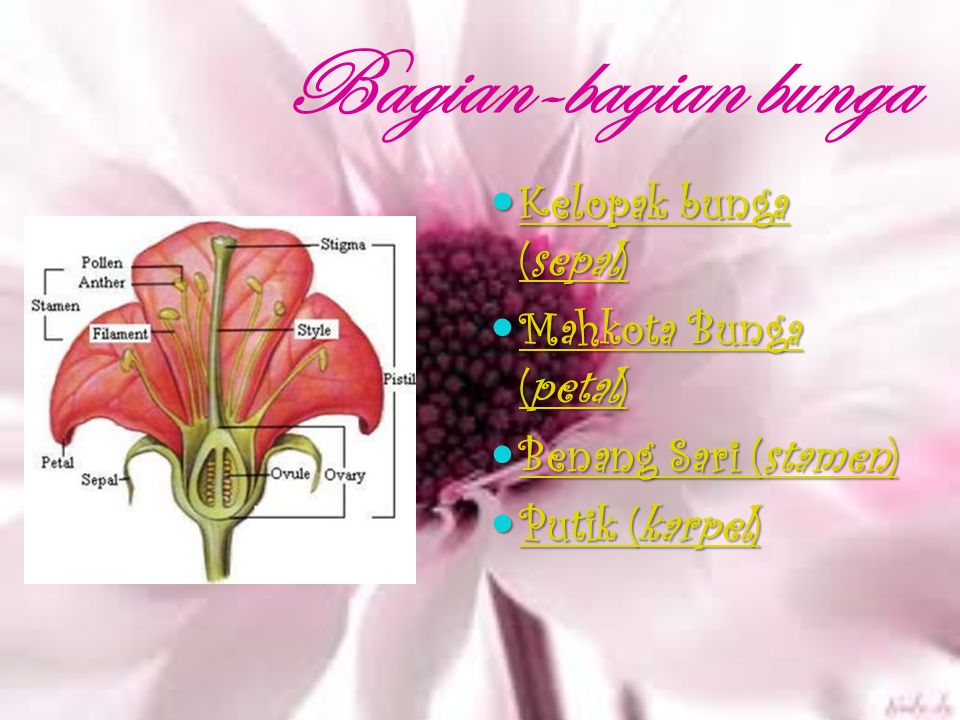 Bagian-bagian bunga Kelopak bunga (sepal) Mahkota Bunga (petal)