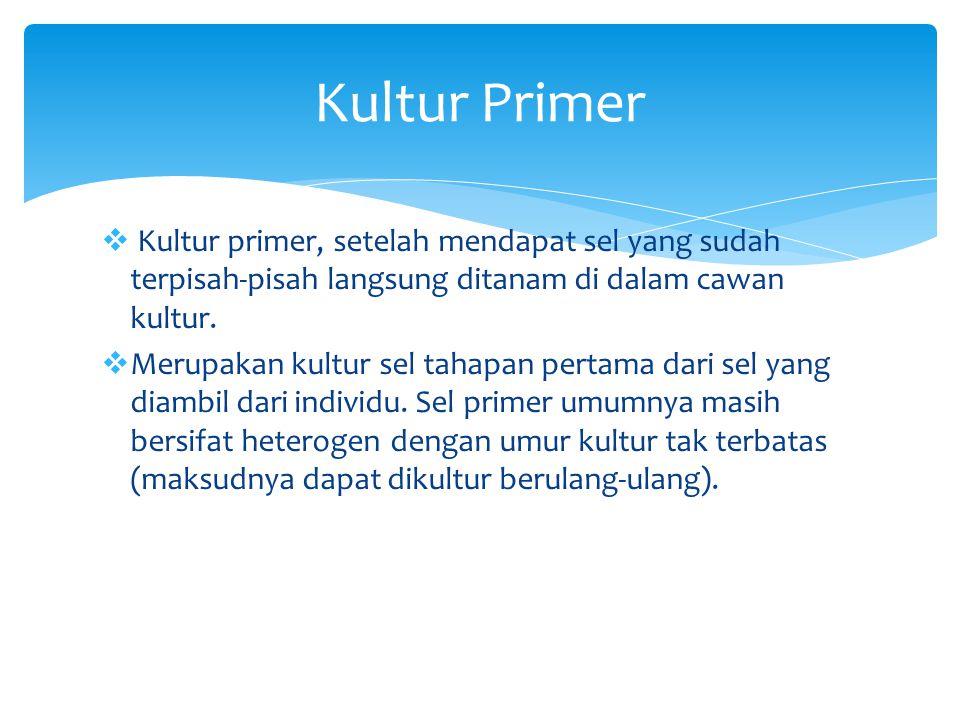 Kultur Primer Kultur primer, setelah mendapat sel yang sudah terpisah-pisah langsung ditanam di dalam cawan kultur.