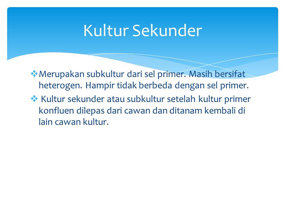 Kultur Sekunder Merupakan subkultur dari sel primer. Masih bersifat heterogen. Hampir tidak berbeda dengan sel primer.