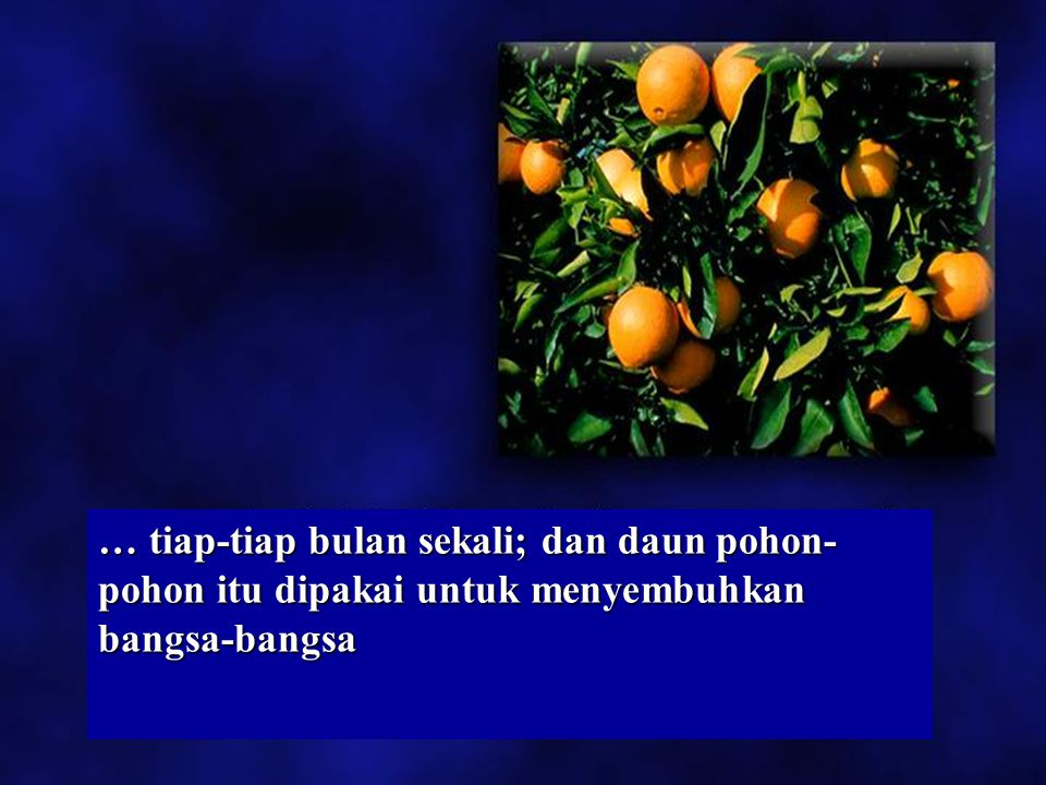 … tiap-tiap bulan sekali; dan daun pohon-pohon itu dipakai untuk menyembuhkan bangsa-bangsa