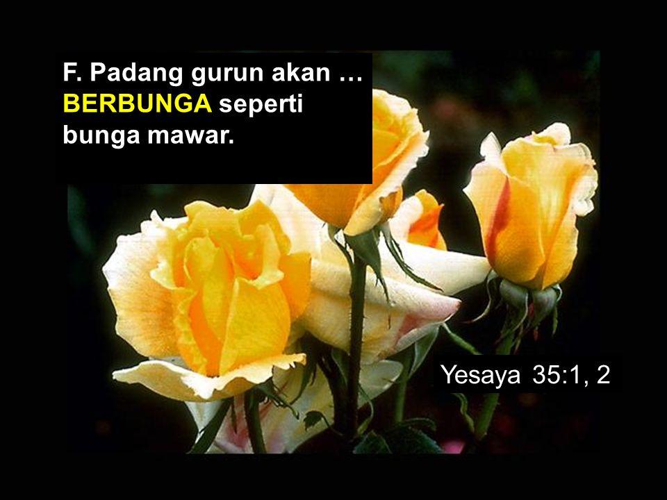 F. Padang gurun akan … BERBUNGA seperti bunga mawar.