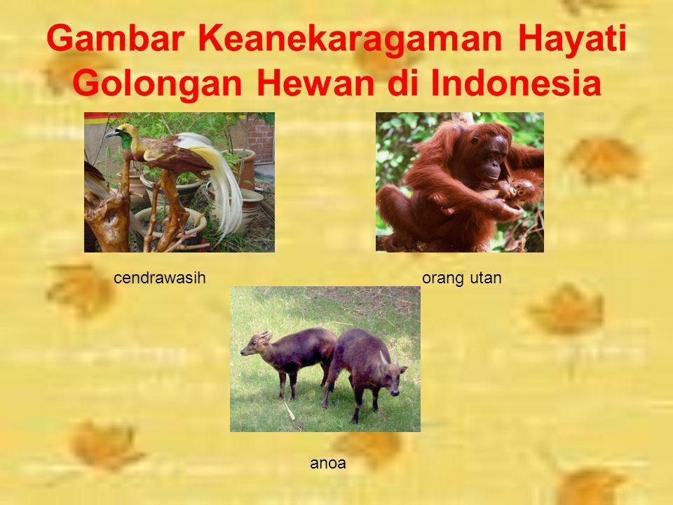Gambar Keanekaragaman Hayati Golongan Hewan di Indonesia