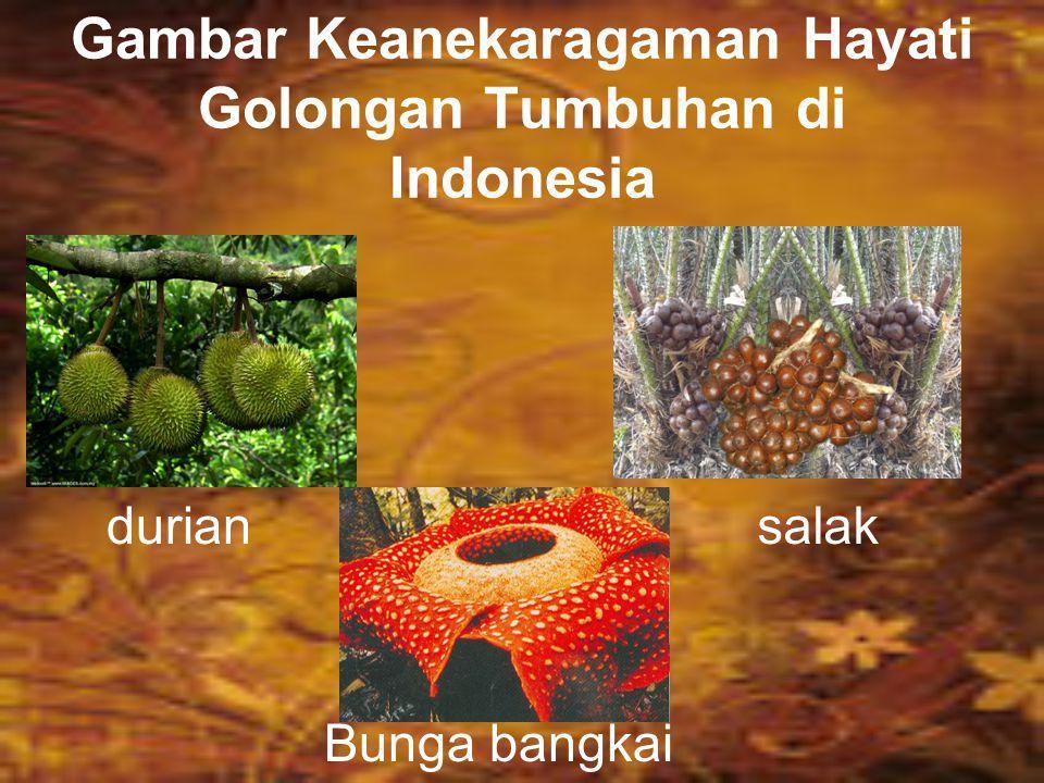 Gambar Keanekaragaman Hayati Golongan Tumbuhan di Indonesia
