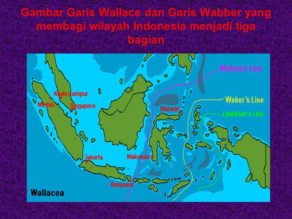 Gambar Garis Wallace dan Garis Wabber yang membagi wilayah Indonesia menjadi tiga bagian