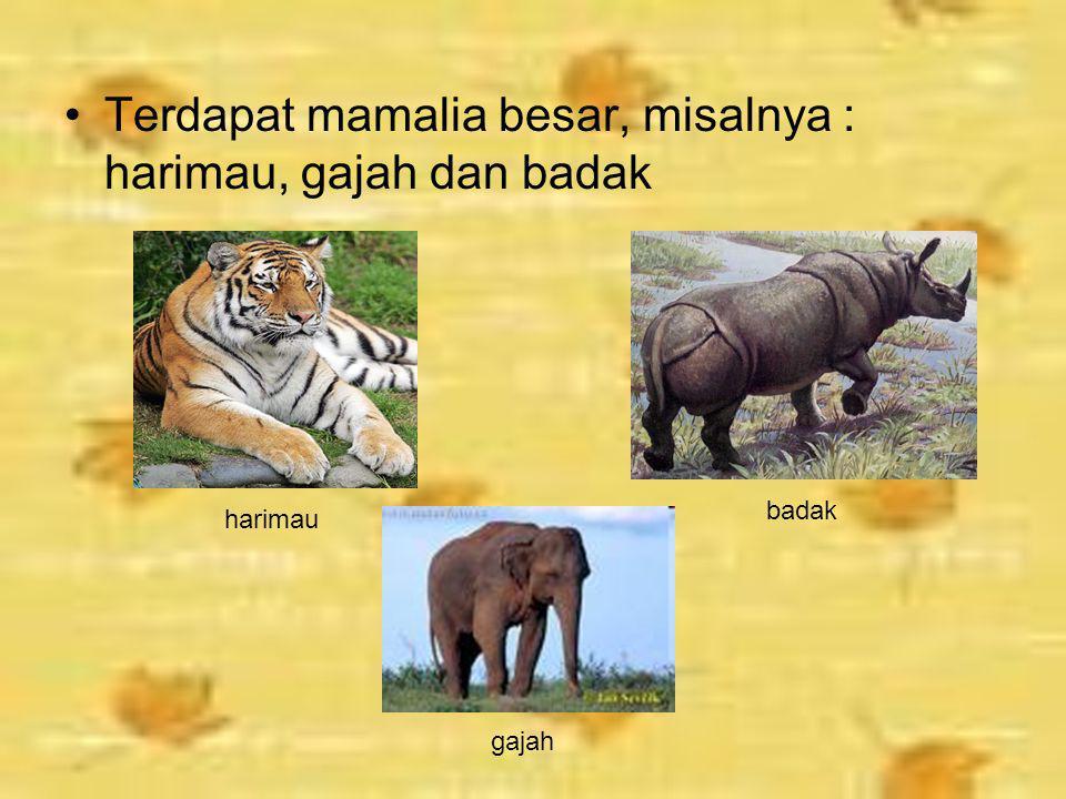 Terdapat mamalia besar, misalnya : harimau, gajah dan badak