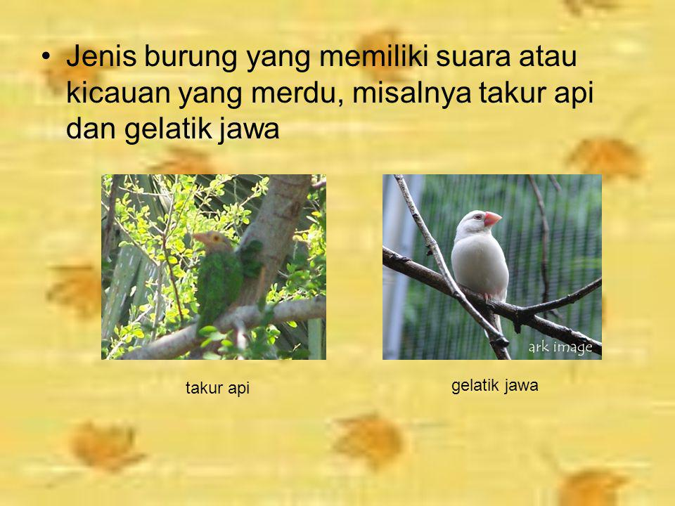 Jenis burung yang memiliki suara atau kicauan yang merdu, misalnya takur api dan gelatik jawa