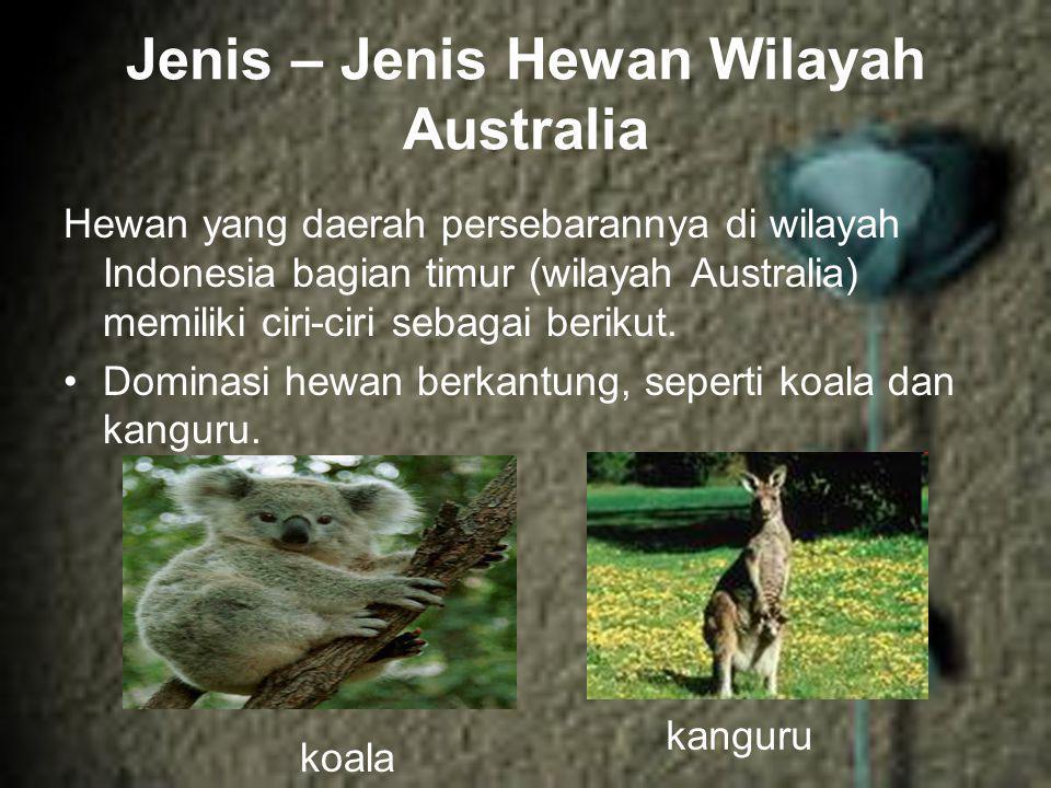 Jenis – Jenis Hewan Wilayah Australia