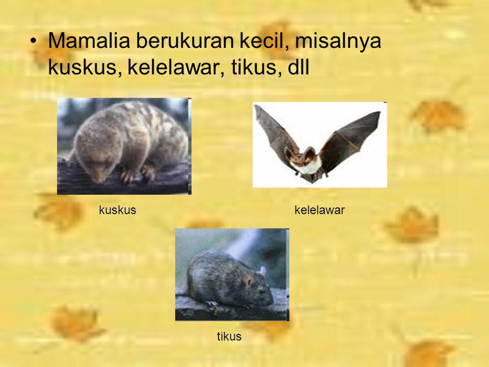Mamalia berukuran kecil, misalnya kuskus, kelelawar, tikus, dll