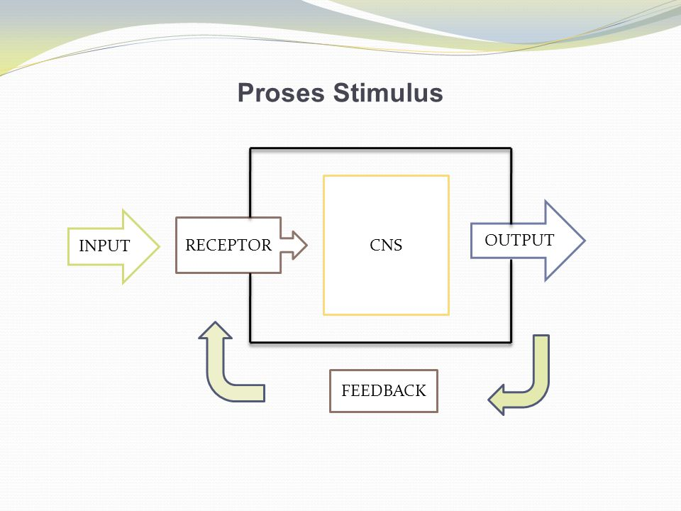 Proses Stimulus CNS OUTPUT INPUT RECEPTOR FEEDBACK