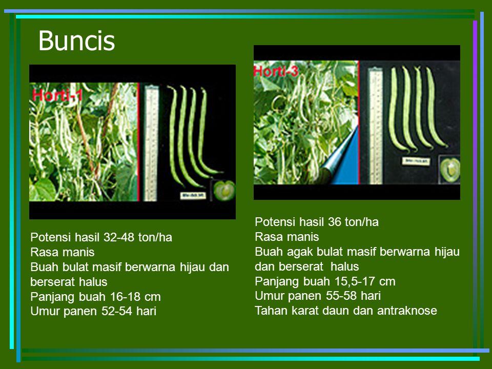Buncis Potensi hasil 36 ton/ha Rasa manis Potensi hasil 32-48 ton/ha