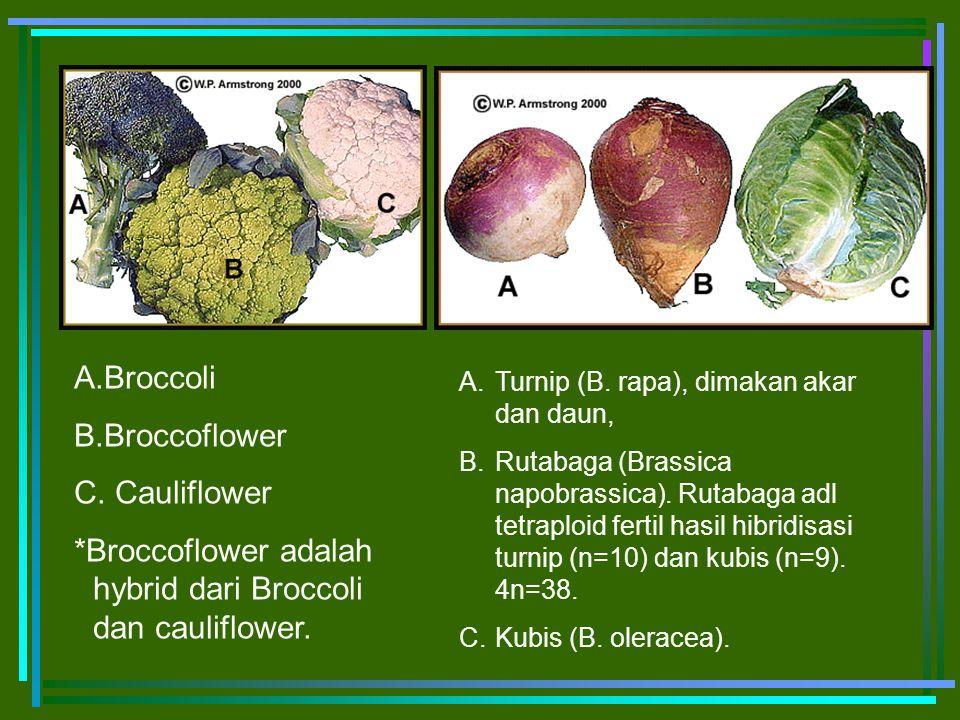 *Broccoflower adalah hybrid dari Broccoli dan cauliflower.