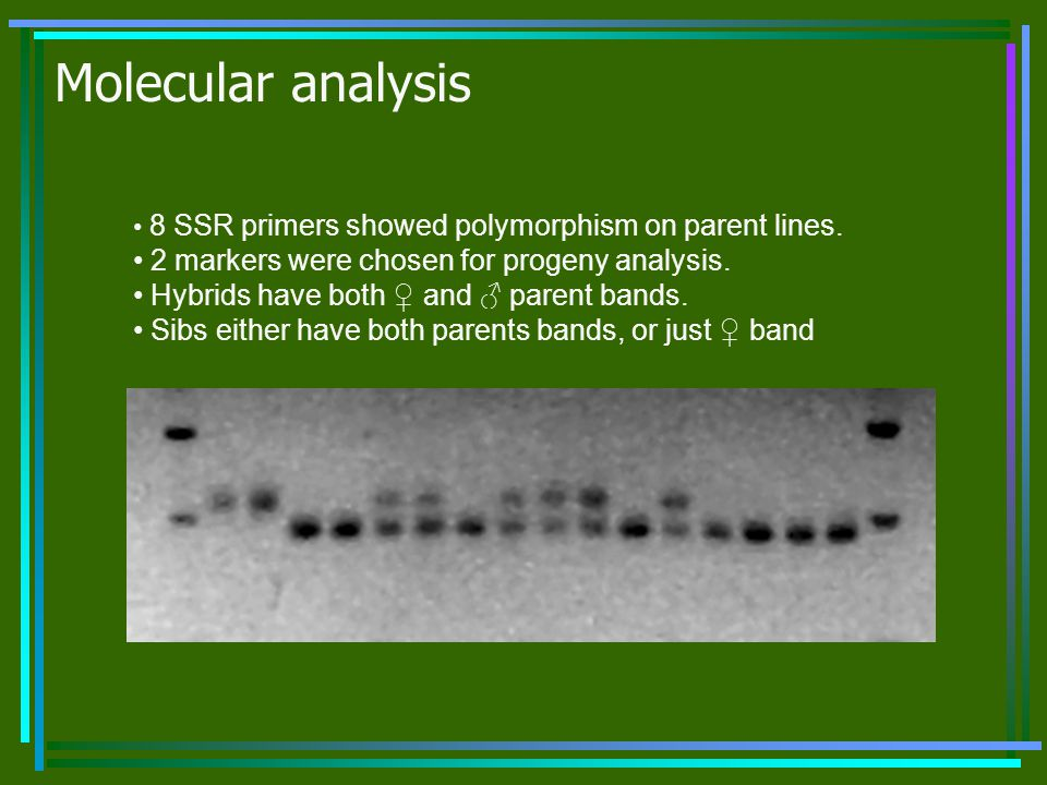 Molecular analysis 2 markers were chosen for progeny analysis.
