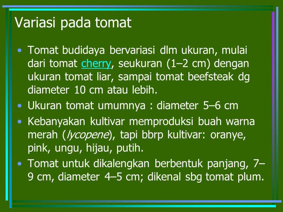 Variasi pada tomat