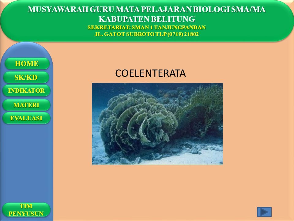 COELENTERATA MUSYAWARAH GURU MATA PELAJARAN BIOLOGI SMA/MA