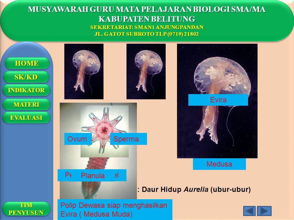 MUSYAWARAH GURU MATA PELAJARAN BIOLOGI SMA/MA KABUPATEN BELITUNG