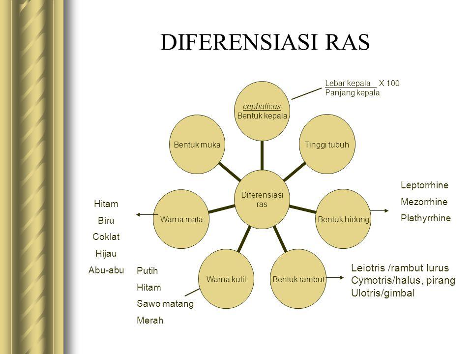 DIFERENSIASI RAS Leptorrhine Mezorrhine Plathyrrhine Hitam Biru Coklat
