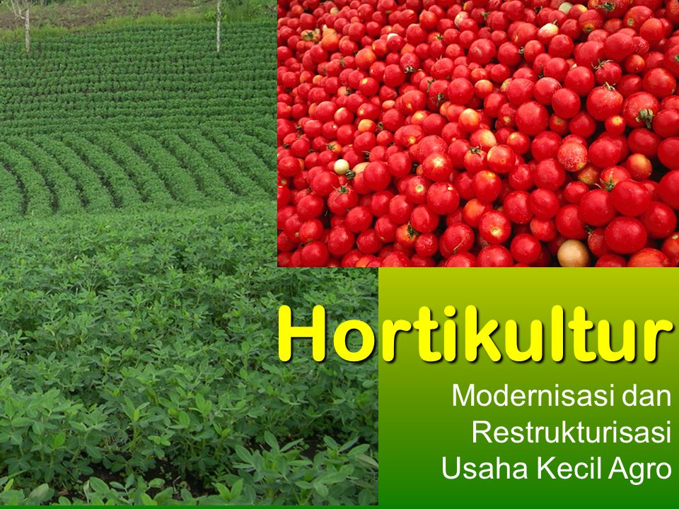 Hortikultur Modernisasi dan Restrukturisasi Usaha Kecil Agro
